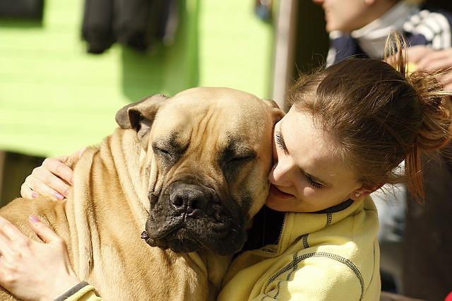 Zvieratá v úlohe terapeutov – animoterapia