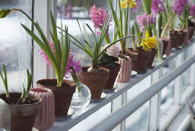 Dom + zimná záhrada = šťastní obyvatelia