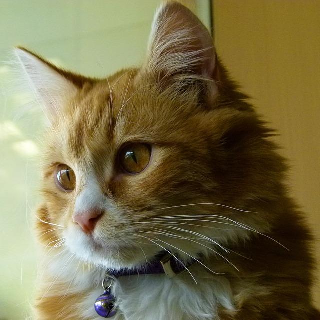Dôvody, prečo vaša mačka čurká mimo nádobky