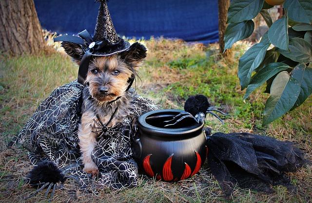 pes v kreatívnom kostýme.jpg