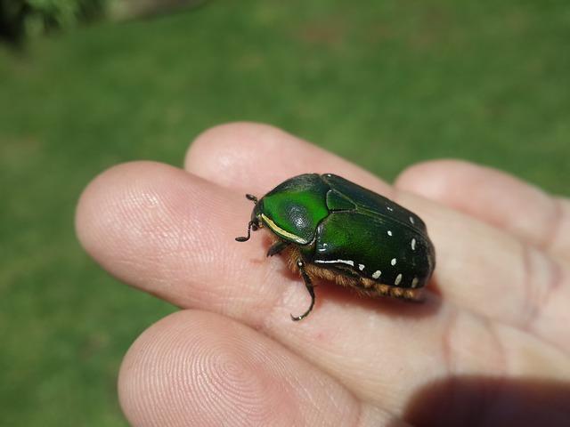 Zelený chrobáčik